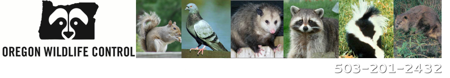Oregon Wildlife Removal           503-201-2432