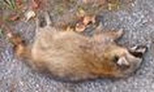 Lake Oswego  Dead Animal Removal